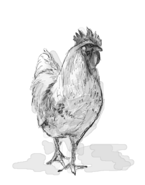 鶏・酉・monochrome