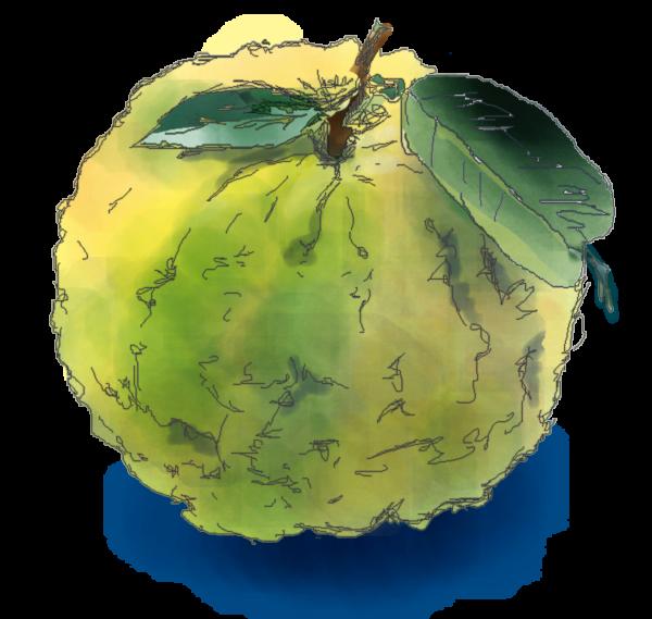 水彩で描いた鬼柚子のイラスト