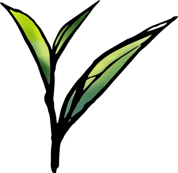 お茶の葉のイラスト